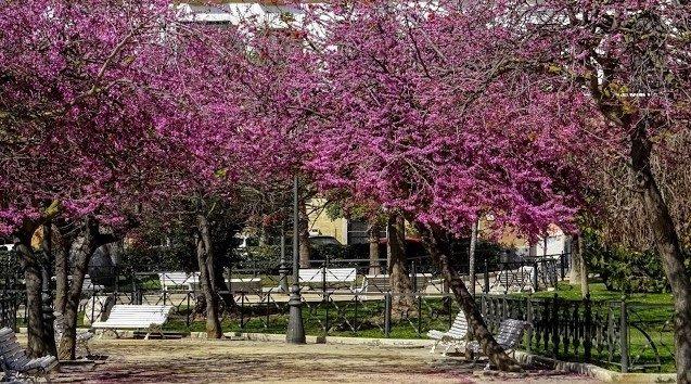 La plaza de España de Cádiz en Primavera