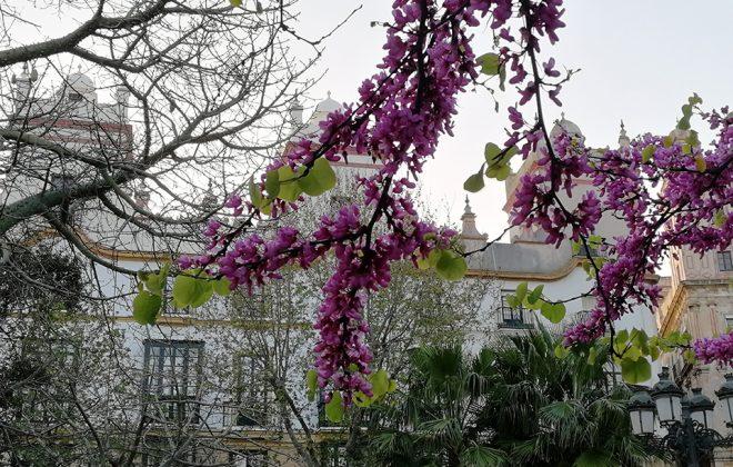 Las torres mirador de Cádiz en Primavera