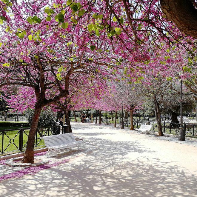 Plaza de España en primavera
