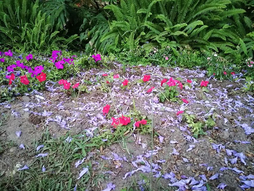 Plantas y flores de la jacaranda